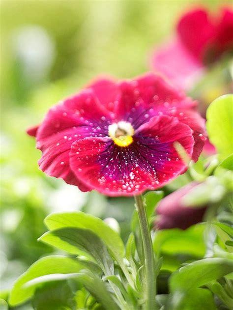 popular spring flowers top 5 pins spring flowers hellosociety blog