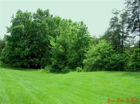imagenes de naturaleza verdes dwaps naturaleza verde