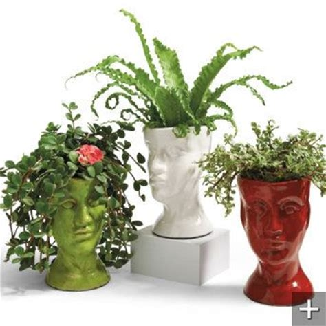 draping plants for pots pinterest the world s catalog of ideas