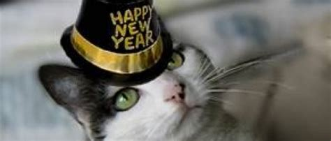 cat years vs years it s caturday and 2016 happy new years cats cats vs cancer