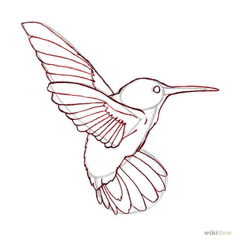 draw hummingbirds hummingbird drawings and bird