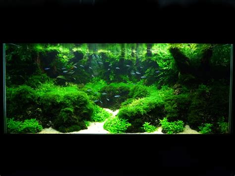 Aquarium Aquascapes by Aquascapes Quot Rives Volcaniques Quot Aquascaping Paludariums