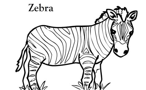 coloring pages of zebra stripes murderthestout