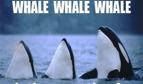 Oh Whale Meme - 90s forever funny pictures quotes memes funny images