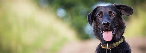 puppy classes seattle obedience programs seattle wa sit means sit
