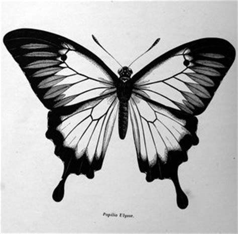 black and white butterfly tattoos realistic black and white butterfly tattoos