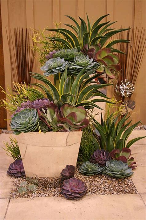 Succulent Container Gardens by Succulent Container Deisigned By Paul Zammit Container Garden Gardening Flowers