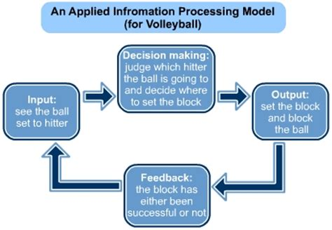 information processing and feedback   s cool, the revision