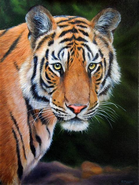 tiger paint tiger how to draw and paint animals wildlife