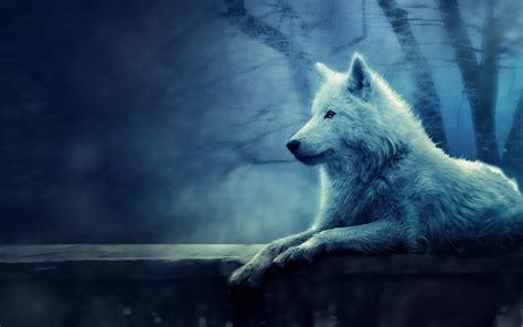 white wolf wallpaper full hd dodskypict