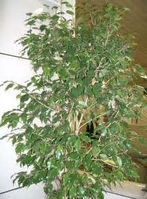 les plantes d 233 polluantes purifiez l air de votre appartement