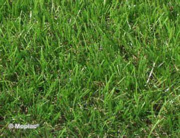 tappeto erba vera prezzi erba sintetica ed accessori per la posa