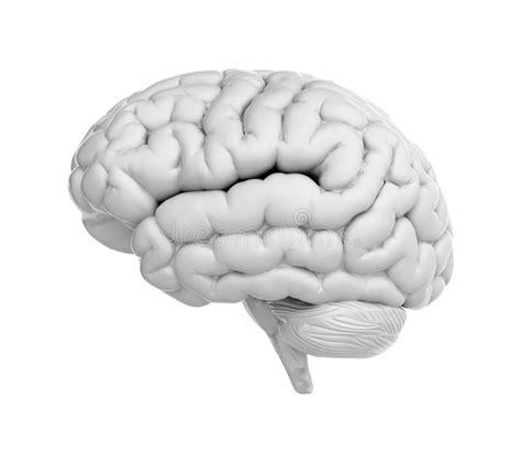 White Brain white brain stock illustration illustration of medicine
