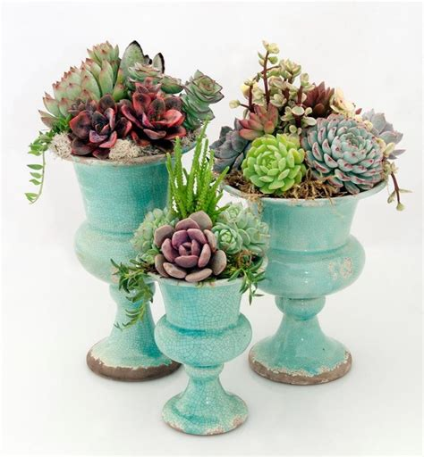 succulents planted in urns succuexcellent pinterest