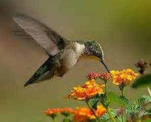 hummingbird brain does this bird think or is everything