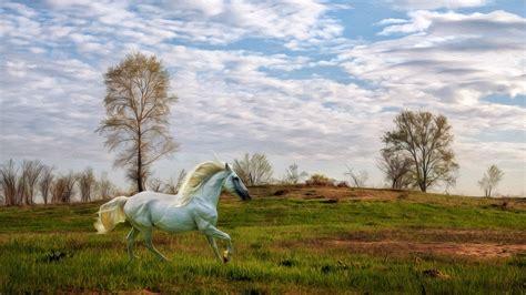 wallpaper hd 1920x1080 horses white horses hd wallpapers horses for desktop hd