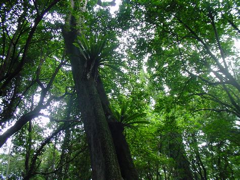 What Is A Forest Canopy Elyunque