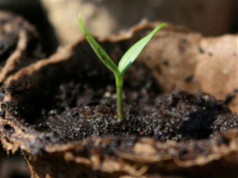 9 vegetables to grow indoors 9 vegetables that grow indoors