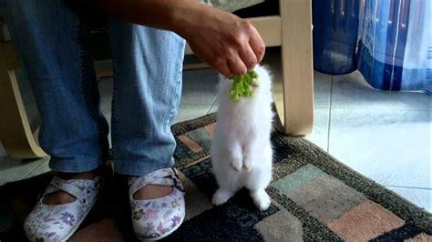 coniglio nano testa di prezzo il mio coniglio nano testa di