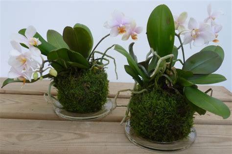 dove trovare vasi per orchidee kokedama cosa sono e come realizzarli greenme