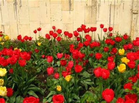 imagenes de flores naturales bonitas hermosas flores naturales descargar fotos gratis