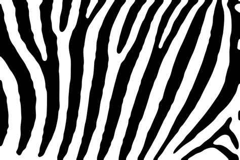 black zebra pattern free illustration zebra skin pattern stripes free
