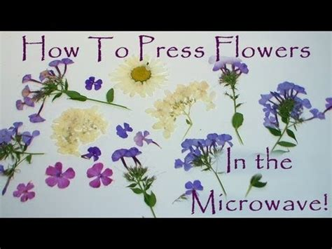 how to press flowers in a microwave youtube