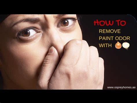 How To Remove Paint Smell From Room by How To Remove Paint Odor With An