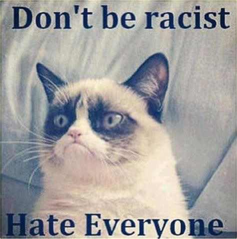 Cat Pic Meme - funny cute angry cat memes collection for friends family