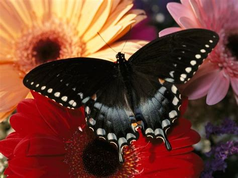 imagenes de mariposas national geographic butterflies patterns in nature photos pictures