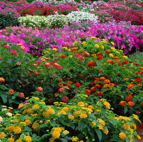 variety of flowers for garden tree variety flower garden flower garden design tips