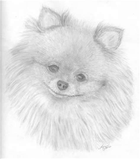 pomeranian drawing pomeranian sketches search the cutest pencil drawings