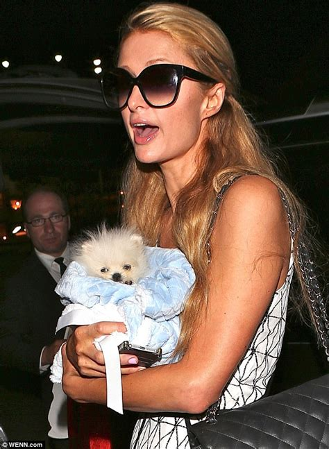 betty s teacup yorkies calgary protects new 13k pomeranian mr amazing at lax daily mail