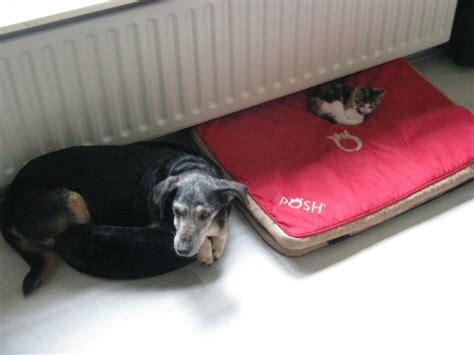 cats in dog beds 28 stolen dog beds that reiterate cats are stingy jerks