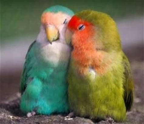 love bird rescue 25 best ideas about birds on beautiful birds pretty birds and birds pics