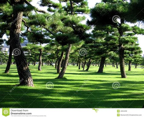 Imperial Garden by Imperial Garden Tokyo Royalty Free Stock Images Image