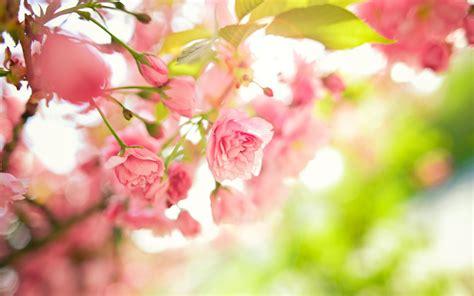 wallpaper hd widescreen high quality desktop flower spring flowers hd widescreen wallpapers 7482 hd