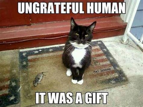 Meme Gifts - lol cats 2 08