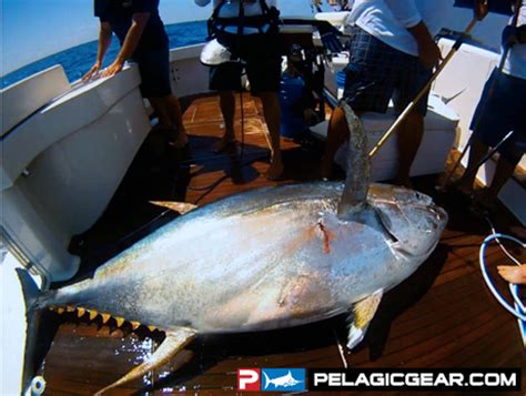 the waterman's journal global sportfishing news, reports