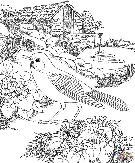 american robin coloring page american robin and wood violet wisconsin state bird and