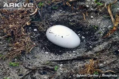bird lay   egg   lifetime quora