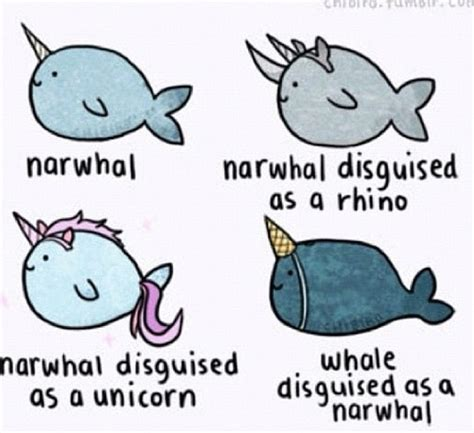 Narwhal Meme - narwhal cassidy board pinterest ocean the o jays