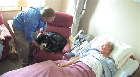 comfort hospice chicago pets offer comfort to hospice patients families