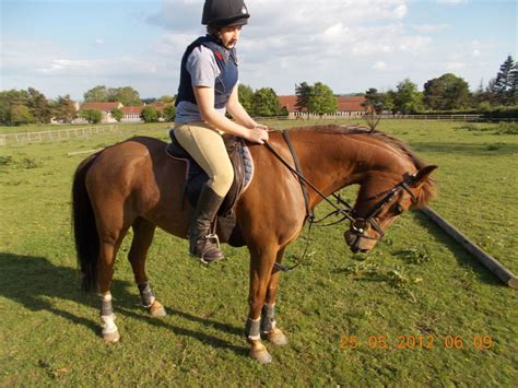 Section B Pony For Sale by Section B Pony Chestnut Gelding York