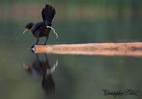 by chris oliphant on 500px amazing photos pinterest chris here is mud in your eye by christopher schlaf on 500px