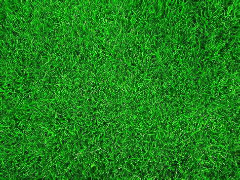 tappeto prato ciarrocchi primo prodotti per il tappeto erboso