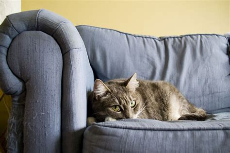 keep cats from scratching couch 6 tips to keep your cat from scratching furniture