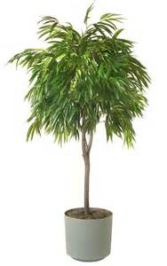 indoor trees low light 4 plants that can improve air quality at home to remove plants and outdoors