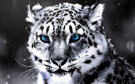 tiger tattoo hd wallpaper download white tiger wallpapers hd wallpaper cave