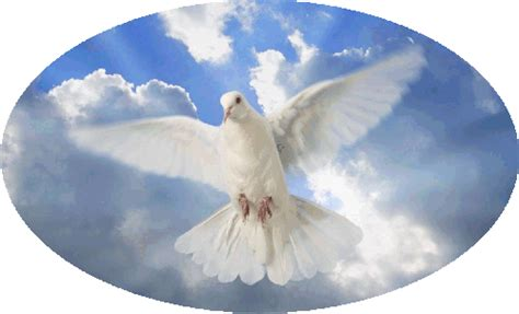 winged gifts of grace some birds spirited musings for s journey books smith s wings of grace white dove release